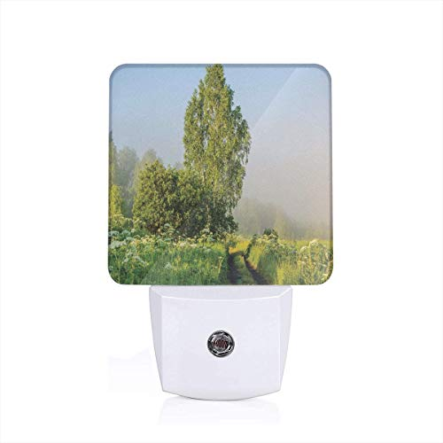 Colorful Plug in Night,Beautiful Serenity Trees Track Path Garden Leaves and Grass Sunny Skies Photography,Auto Sensor LED Dusk to Dawn Night Light Plug in Indoor for Childs Adults