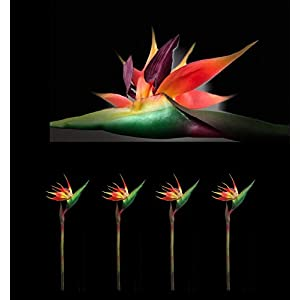 """AMERIQUE Pack of 4 PCS Gorgeous Pack of Four (4) 43"""" Touch Bird of Paradise Artificial Silk Sprays, Feel Real Tech, Large Permanent Flower, Super Quality, 4 Pieces, Orange, Red and Green 4"""