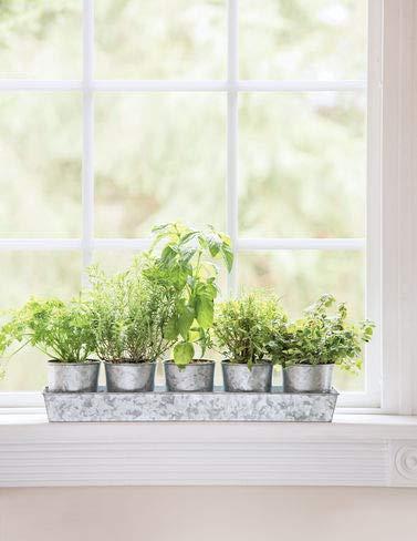 (Galvanized Herb Planters with Rectangular)