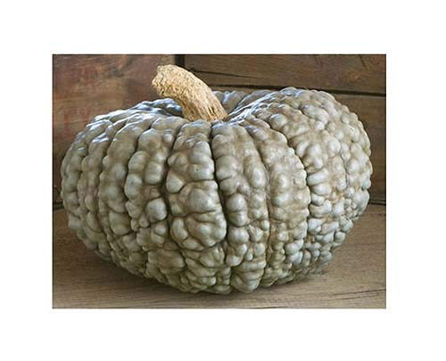 Marina Di Chioggia Bumpy Blue Pumpkin Seeds - One of The Most Intereting and Decorative Pumpinks as Well as Delicious