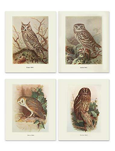 (Owl Wall Art, 8