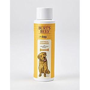 Burt's Bees Natural Oatmeal Shampoo for Dogs   Made with Colloidal Oat Flour and Honey   Best Oatmeal Dog Shampoo, 16 Ounces 44
