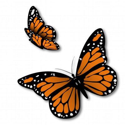 Monarch Butterflies Set of 2 Vinyl Sticker - Car Window Bumper Laptop - SELECT SIZE