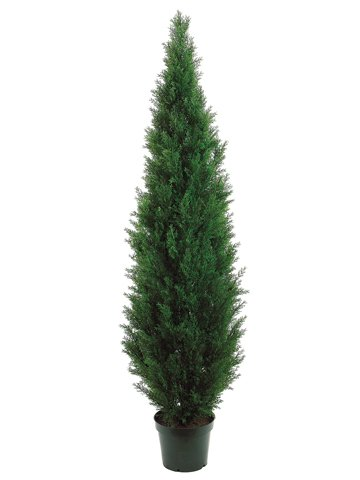 84'' Cedar Topiary w Green Pot by Allstate Floral