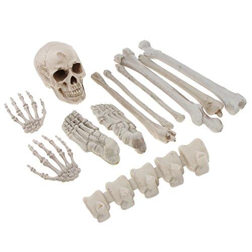 Baoblaze Horrible Skeleton Bones 12 Pieces/Set with Skull, Hands, Feet Bones, Backbone, Long Bones Halloween Decoration by Baoblaze