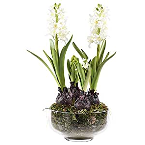 Little Green House Hyacinth Indoor Flowers Pot, White