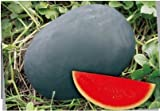 2018 Hot Sale!! Heirloom Gray Skin Big Long Red Sweet Seedless Watermelon Organic Seed, Professional Pack, 50 Seeds/Pack, 100% True Seed E3003