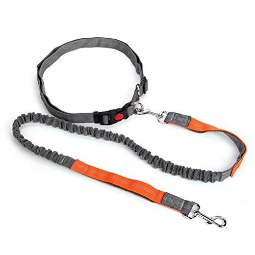 Hands Free Dog Leash Dual-Handle Dog Leash