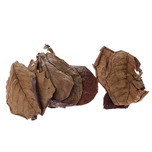 Honey Indian Almond Leaves Catappa Terminalia Natural Agent Ph Water Aquarium Tanks Quality First Pet Supplies