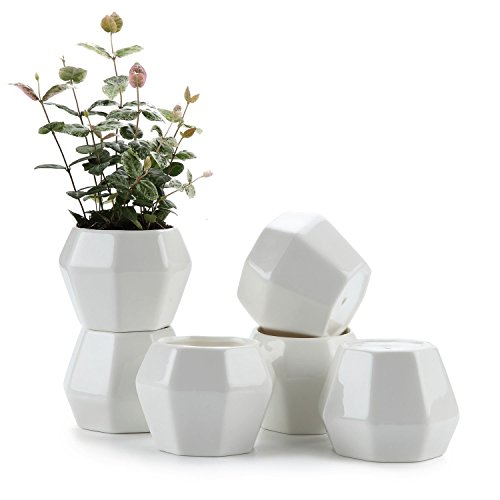 JynXos 3.75 Inch Ceramic White Octagonal Shape succulent Plant Pot/Cactus Plant Pot Flower Pot/Container/Planter Package 1 Pack of - Octagonal Shapes