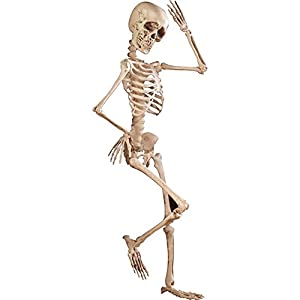 Amazon.com : Spooky Posable Skeleton Halloween Décor, 4-ft Tall ...