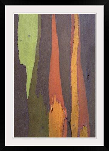 GreatBIGCanvas ''Rainbow Eucalyptus Bark, Close-Up, Kauai, Hawaii'' by Peter Van Rhijn Photographic Print with Black Frame, 24'' x 36'' by greatBIGcanvas