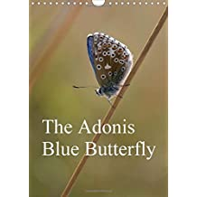 The Adonis Blue Butterfly 2016: The Adonis Blue Butterfly is one of the most visually stunning insects usually only glanced at on a Summers day. This Calendar brings to the reader its true splendour.