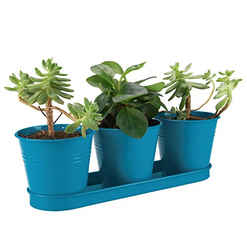 - West Beauty Flower Pot, Modern Plant Holder for Succulent, Cactus and Herb, Small Metal Planter Container with Tray for Indoor and Outdoor, Set of 3, Blue