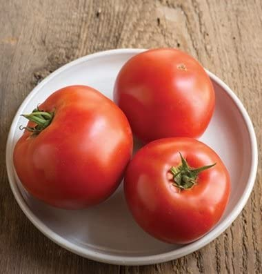 American Seed Beefsteak Tomato FREE SHIPPING Delicious Red Tomato