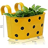 Cocogarden Metal Dotted Oval Railing Planter (Yellow, Pack of 1)