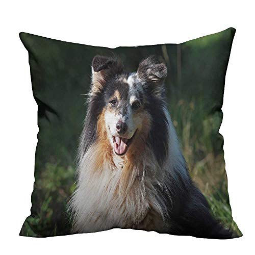 alsohome Zippered Pillow Covers Portrait of Sheltie Dog on a Natural Background Decorative Couch 26x26 inch(Double-Sided Printing)