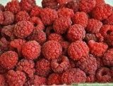 Mrs. Miller's Amish Homemade Seedless Red Raspberry