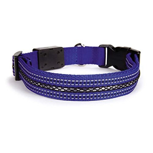 Casual Canine LED Dog Collar, 10 to 12-Inch, Blue