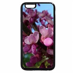iPhone 6S Plus Case, iPhone 6 Plus Case, JUDAS TREE