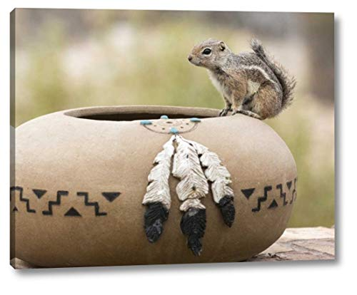 "AZ, Buckeye Harriss Antelope Squirrel by Wendy Kaveney - 12"" x 15"" Gallery Wrapped Giclee Canvas Print - Ready to Hang"