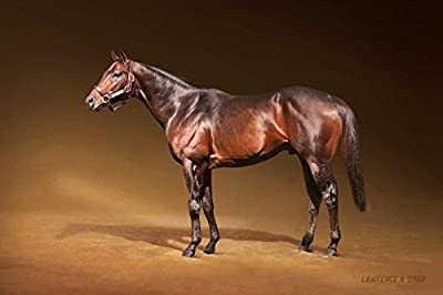 Seattle Slew Giclee Art Print Canvas Triple Crown Champion Thoroughbred Race Horse Equine Kentucky Derby Preakness Belmont Stakes Breeders Cup