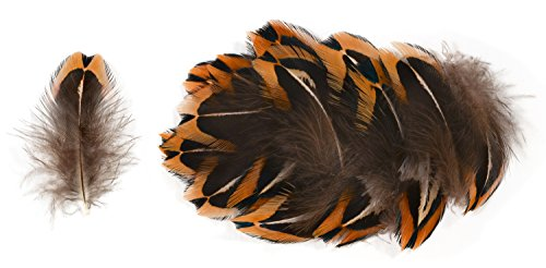 Ring-necked Pheasant Upper Back Feathers (20 Pieces), for sale  Delivered anywhere in USA