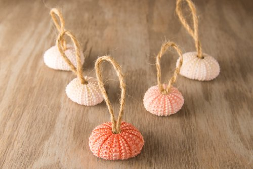 Hinterland Trading Christmas Pink Sea Urchin Ornaments Set Of 5
