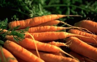 David's Garden Seeds Carrot Danvers DGS30010AS (Orange) 1000 Organic Heirloom Seeds