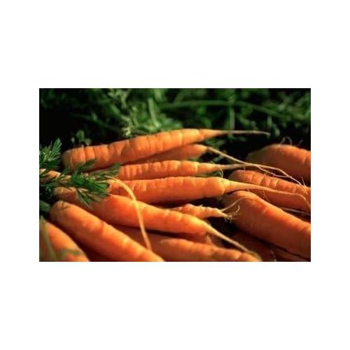 David's Garden Seeds Carrot Danvers DGS30010AS (Orange) 1000 Organic Heirloom Seeds