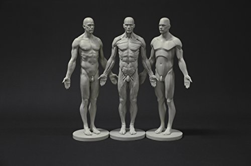 Male Anatomy Figure Collection: Planar, Ecorche and Skin – Anatomical Reference for Artists
