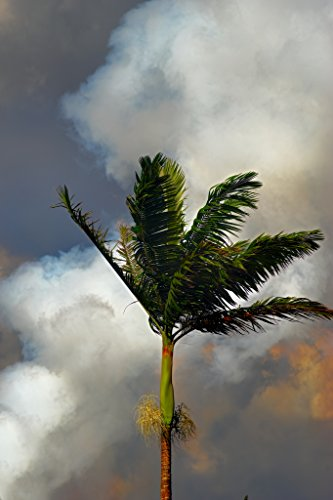 'Palm Tree, Fissure 9' Kilauea East Rift Zone 2018 lava Erup
