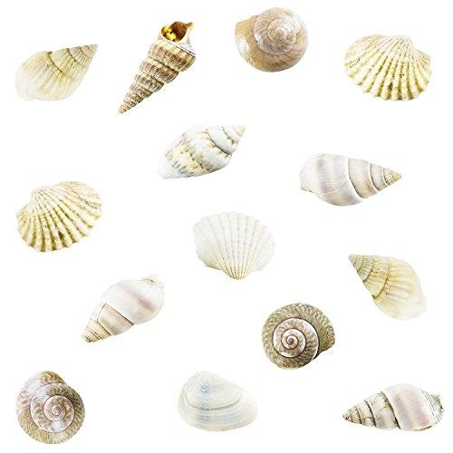 Tiny Miniature Fairy Garden Beach Critter Seashells Marine Life Collection for Art & Craft Project, Outdoor & Indoor Home Decoration, Party Favor, Invitation (4.5oz Bag, 500 Shell)