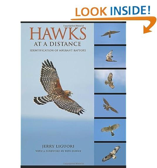 Red Tail Hawk Amazon