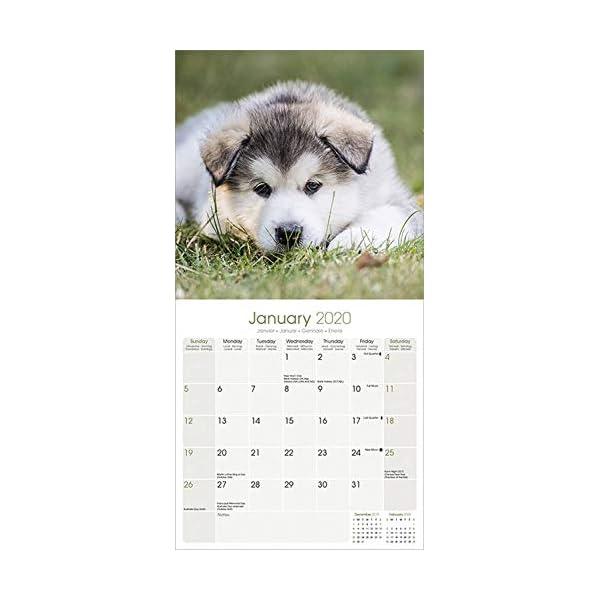 Alaskan Malamute Calendar - Dog Breed Calendars - 2019 - 2020 Wall Calendars - 16 Month by Avonside 2