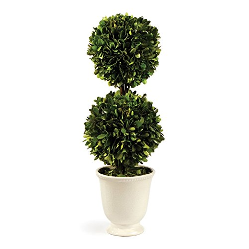 Preserved Boxwood Double Ball Topiary in Beaded Pot - Boxwood Double Ball
