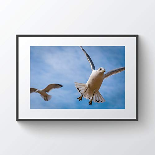 YourLoveLLC Wooden Frame Two Seagulls in Chesapeake Beach Maryland Photo Print Metal Framed Black Wood Frame for Wall