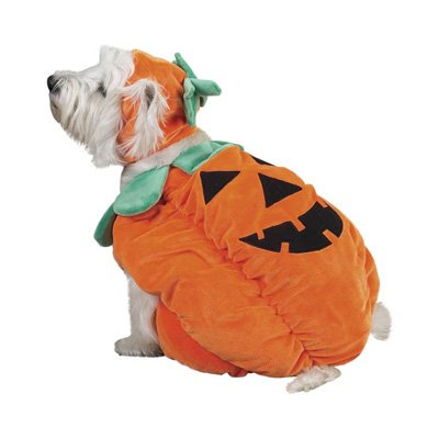 [Zack & Zoey Pumpkin Pooch Dog Costume, Small, Orange] (Cat In Pumpkin Costume)