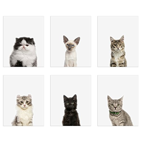 (Kitten Portraits Prints - Set of 6 (8x10) Baby Cat Minimalist Nursery Wall Art Decor - Siamese - Tabby - Shorthair - Longhair - Maine Coon - Persian - Scottish Fold - Black)