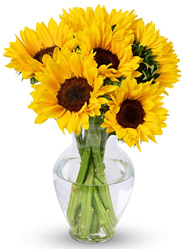 Benchmark Bouquets Yellow Sunflowers, With Vase (Fresh Cut - Bouquet Rose Ftd