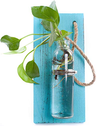 Rustic Home Décor Wall Art Decoration Solid Wooden Board (Retro Polished) Hanging Planters Wall Vases Hydroponic Plants Hanging Glassware for Home Garden Living Room Decor (no Flower)(Blue Sky)