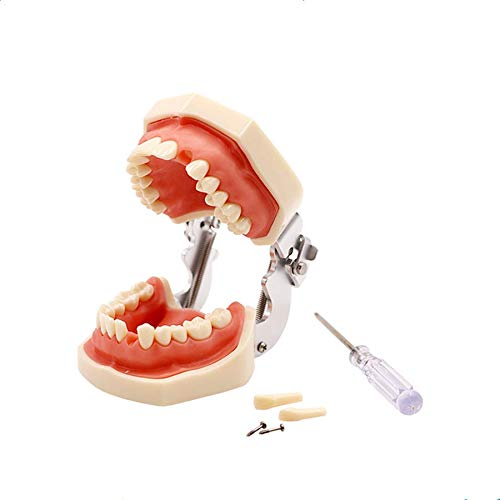Amazon.com: YOUYA DENTAL TM-022 - Herramientas de estudio ...