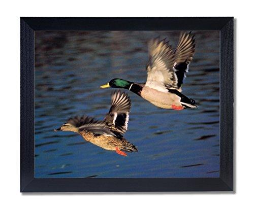 Wildlife Ducks (Solid Wood Black Framed Mallard Duck Flying Lake Animal Wildlife Cabin Pictures Art)