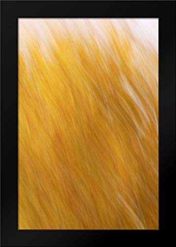 New Mexico Abstract of Blurred Cottonwood Trees Framed Art Print by Morris, ()