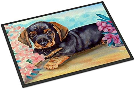 Caroline s Treasures 7501MAT Dachshund Indoor Outdoor Mat 18×27 Doormat, 18H X 27W, Multicolor