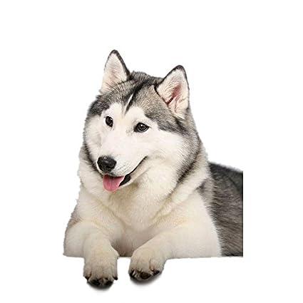 Calap Store 1pcs 13x17cm 3d Car Sticker Cute Husky Dog Cat Car