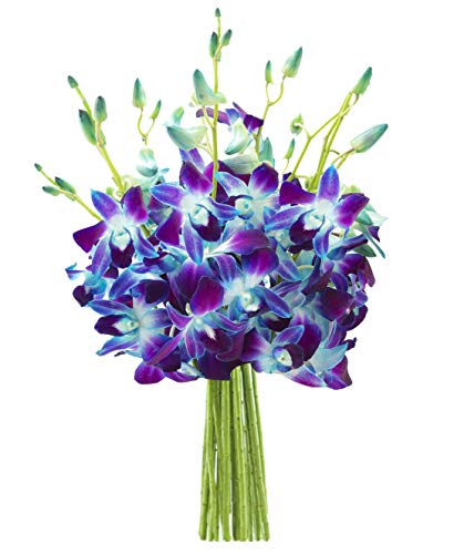 KaBloom Exotic Sapphire Orchid Bouquet of Blue Orchids from Thailand