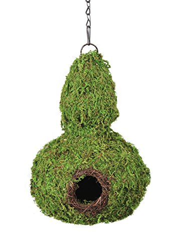 Super Moss (56011) Gourd Birdhouse with Chain, 7.5 by 12-Inch, Fresh Green by Super Moss