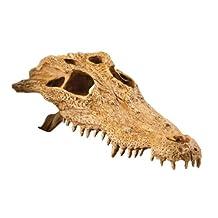 Exo Terra Crocodile Skull Terrarium D