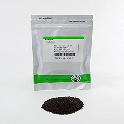 Mizuna Mustard Seeds: Non-GMO Japanese Mustard Microgreens Seeds - Micro Herb Greens